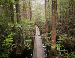 Picture of a bog boardwalk